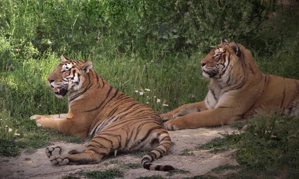 Parques De Animales  El blog de Aladinia