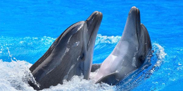 nadar con delfines valencia