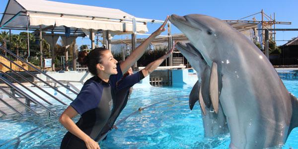 Otros buenos lugares para nadar con delfines en España