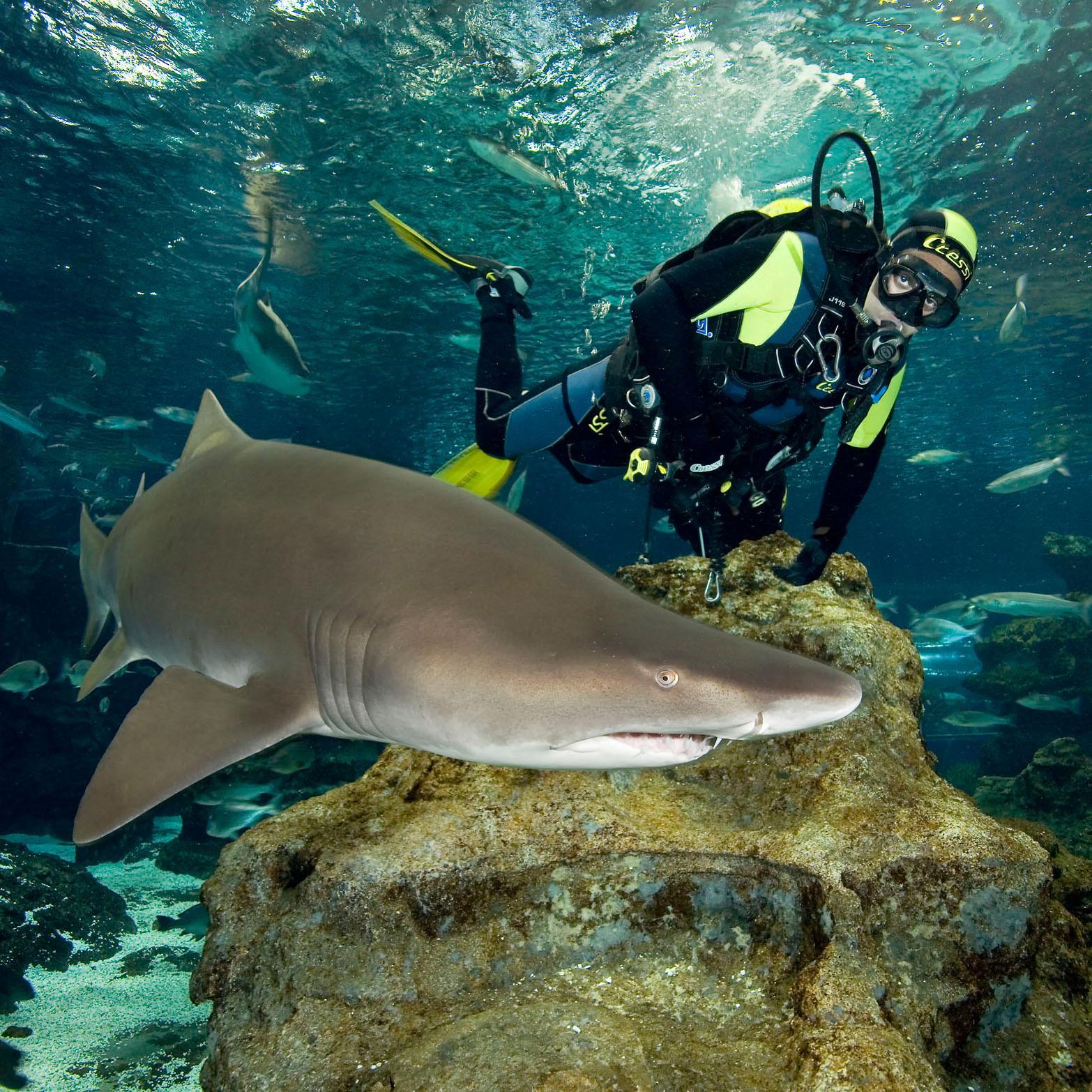 Buceo con tiburones barcelona atr vete a sumergirte con for Precio oceanografic valencia 2016