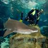 Buceo con Tiburones (Barcelona)