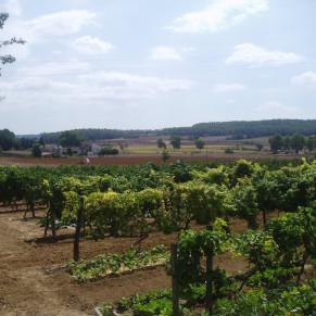 Visita Guiada por Bodega Baronia de Vilademuls y Cata de Vinos para dos (Parets d'Empordà, Girona)